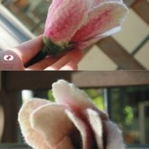 blume_magnolia_2